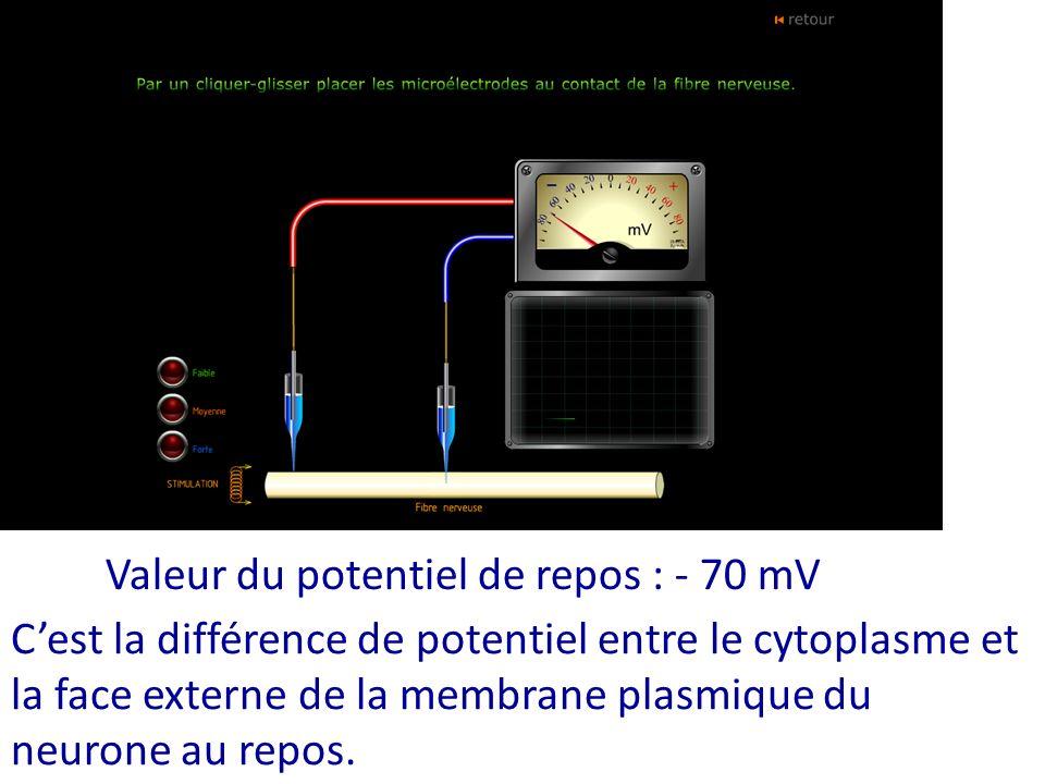 Valeur du potentiel de repos : - 70 mV Cest la différence de potentiel entre le cytoplasme et la face externe de la membrane plasmique du neurone au r