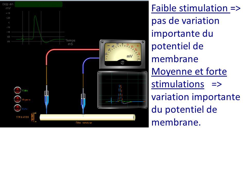 Faible stimulation => pas de variation importante du potentiel de membrane Moyenne et forte stimulations => variation importante du potentiel de membr
