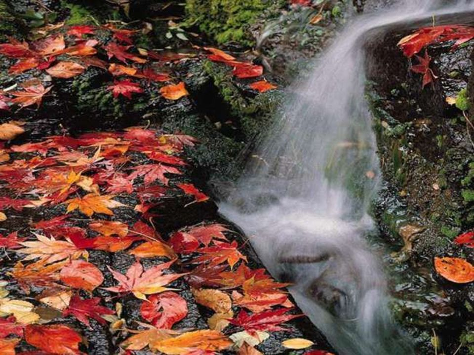 Pour cette eau de source qui coule, fraîche et claire, pour la brise qui calme lardeur du soleil, nous te rendons grâce, Seigneur!
