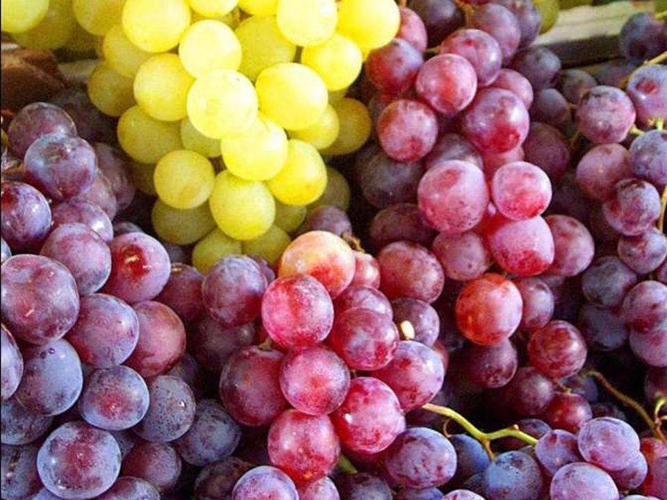 Nous te rendons grâce, Seigneur! pour ce grand jardin où fruits et légumes font la fête.