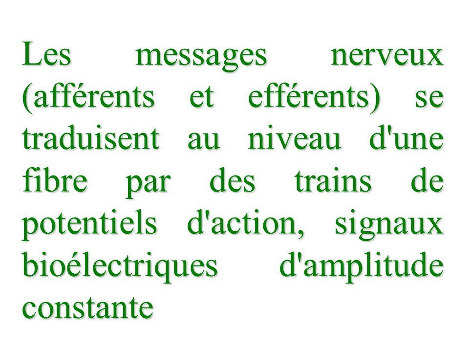 Les messages nerveux (afférents et efférents) se traduisent au niveau d'une fibre par des trains de potentiels d'action, signaux bioélectriques d'ampl