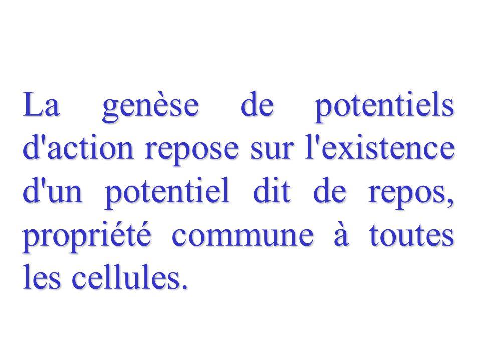 La genèse de potentiels d'action repose sur l'existence d'un potentiel dit de repos, propriété commune à toutes les cellules.
