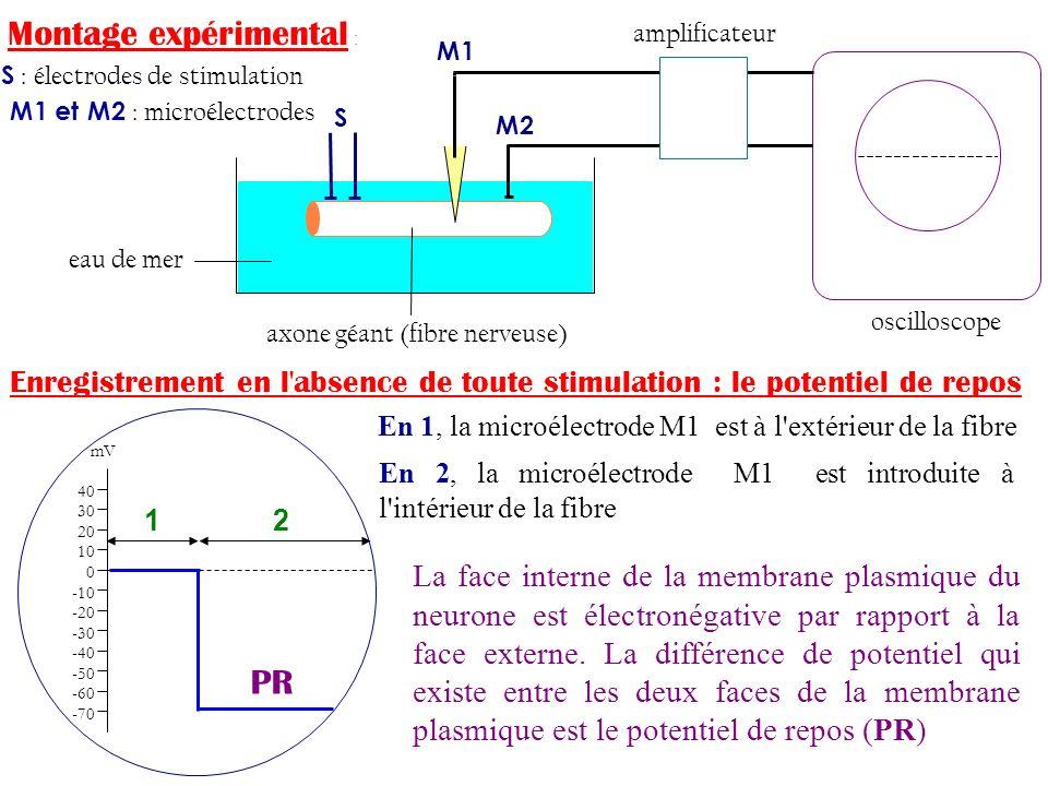 Montage expérimental : S : électrodes de stimulation M1 et M2 : microélectrodes amplificateur eau de mer axone géant (fibre nerveuse) oscilloscope S M