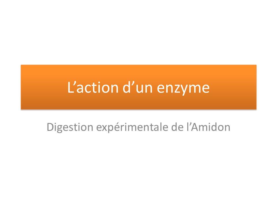 Laction dun enzyme Digestion expérimentale de lAmidon