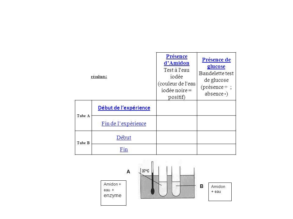 résultats : Présence dAmidon Test à l'eau iodée (couleur de l'eau iodée noire = positif) Présence de glucose Bandelette test de glucose (présence + ;