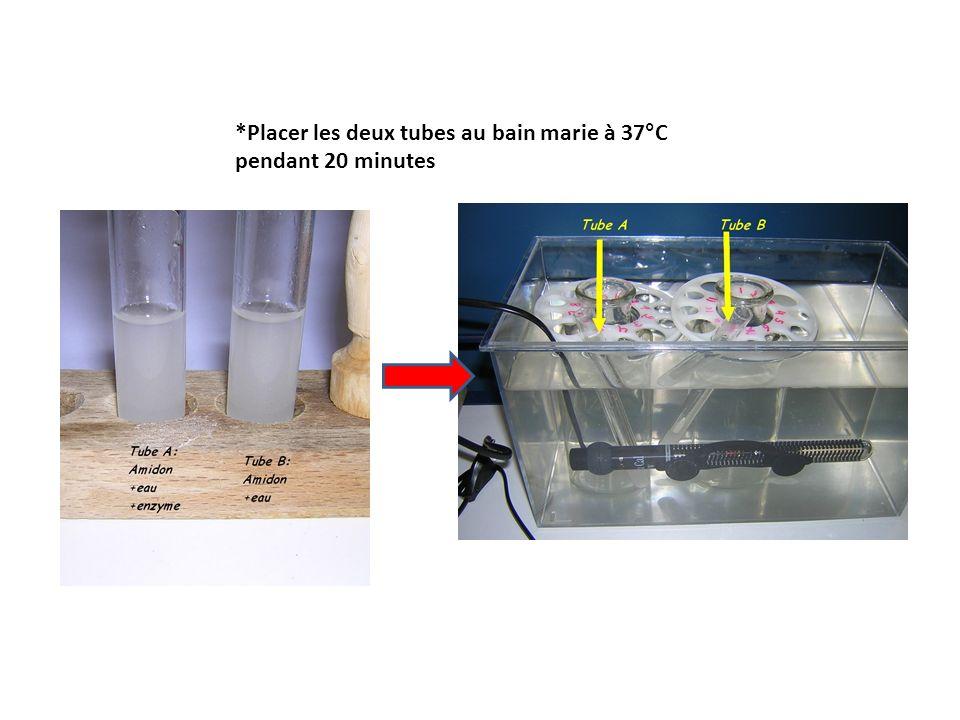 *Placer les deux tubes au bain marie à 37°C pendant 20 minutes