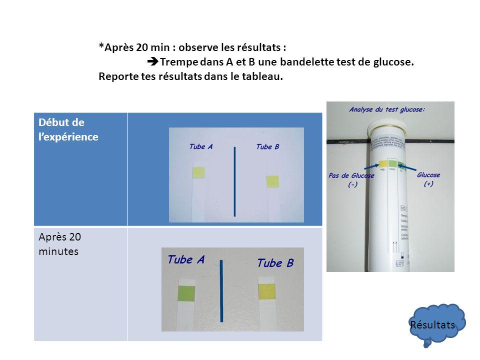 *Après 20 min : observe les résultats : Trempe dans A et B une bandelette test de glucose. Reporte tes résultats dans le tableau. Début de lexpérience
