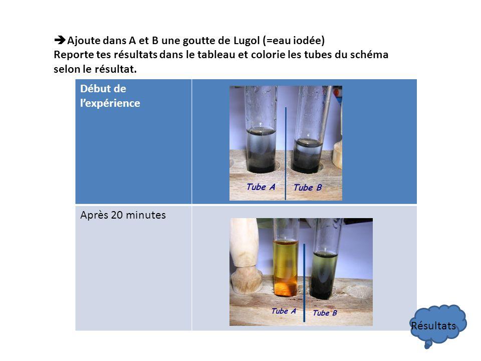 Ajoute dans A et B une goutte de Lugol (=eau iodée) Reporte tes résultats dans le tableau et colorie les tubes du schéma selon le résultat. Début de l
