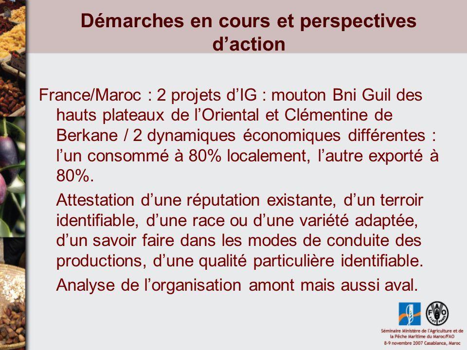 Démarches en cours et perspectives daction France/Maroc : 2 projets dIG : mouton Bni Guil des hauts plateaux de lOriental et Clémentine de Berkane / 2 dynamiques économiques différentes : lun consommé à 80% localement, lautre exporté à 80%.