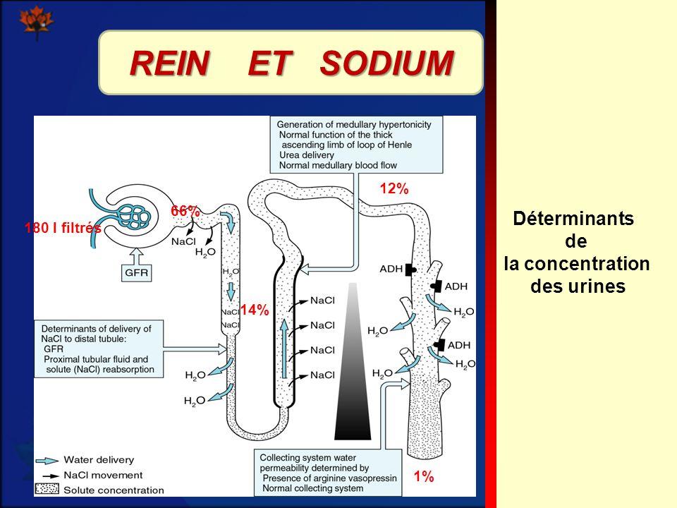 12 Déterminants de la concentration des urines 180 l filtrés 66% 14% 12% 1% REIN ET SODIUM
