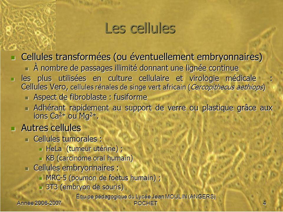 Année 2006-2007 Équipe pédagogique du Lycée Jean MOULIN (ANGERS) POCHET4 Les cellules Cellules transformées (ou éventuellement embryonnaires) Cellules