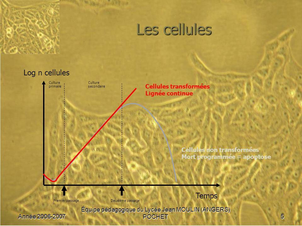 Année 2006-2007 Équipe pédagogique du Lycée Jean MOULIN (ANGERS) POCHET5 Les cellules Cellules non transformées Mort programmée = apoptose Log n cellu