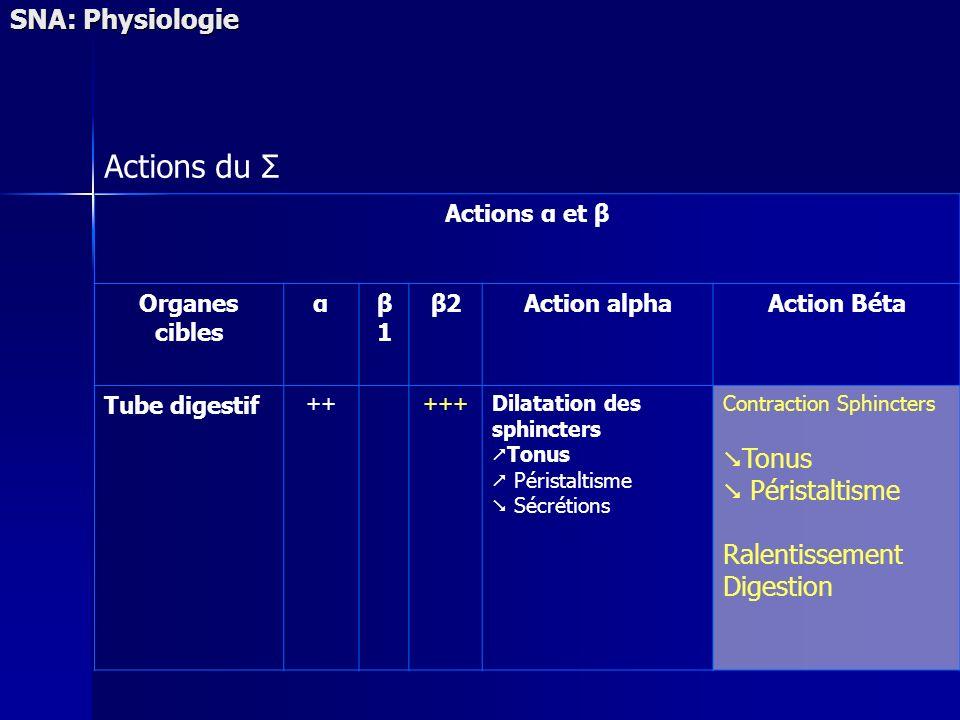 SNA: Physiologie Actions du Σ Actions α et β Organes cibles αβ1β1 β2Action alphaAction Béta Tube digestif +++++Dilatation des sphincters Tonus Pérista