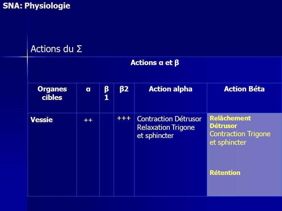 SNA: Physiologie Actions du Σ Actions α et β Organes cibles αβ1β1 β2Action alphaAction Béta Vessie ++ +++ Contraction Détrusor Relaxation Trigone et s