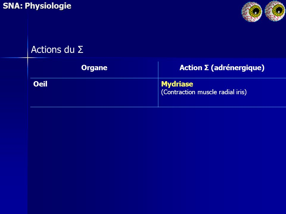 SNA: Physiologie Actions du Σ OrganeAction Σ (adrénergique) OeilMydriase (Contraction muscle radial iris)