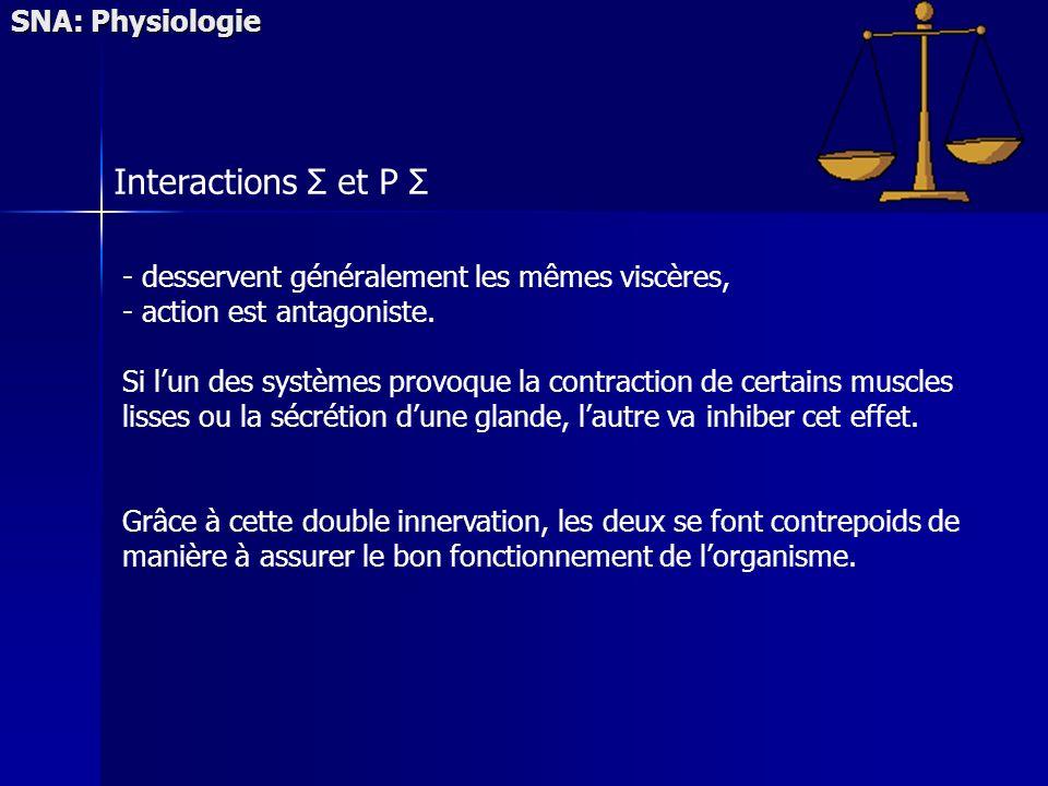SNA: Physiologie Interactions Σ et P Σ - desservent généralement les mêmes viscères, - action est antagoniste.