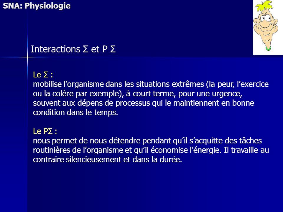 SNA: Physiologie Interactions Σ et P Σ Le Σ : mobilise lorganisme dans les situations extrêmes (la peur, lexercice ou la colère par exemple), à court