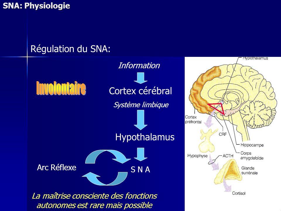 SNA: Physiologie Régulation du SNA: Cortex cérébral Système limbique S N A Information Hypothalamus Arc Réflexe La maîtrise consciente des fonctions autonomes est rare mais possible