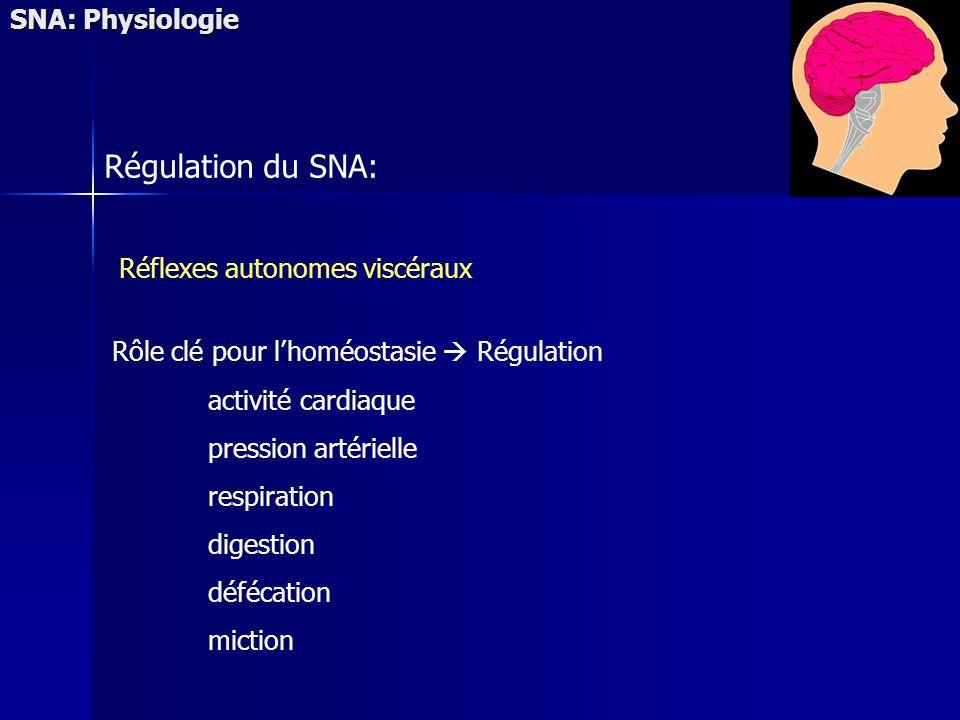 SNA: Physiologie Régulation du SNA: Réflexes autonomes viscéraux Rôle clé pour lhoméostasie Régulation activité cardiaque pression artérielle respiration digestion défécation miction