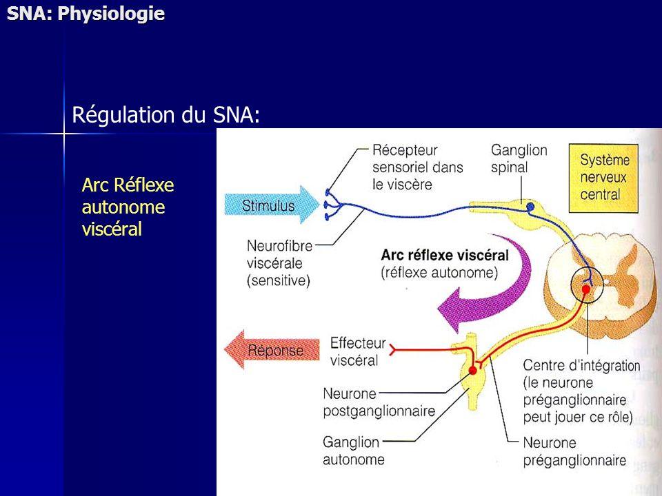 SNA: Physiologie Régulation du SNA: Arc Réflexe autonome viscéral