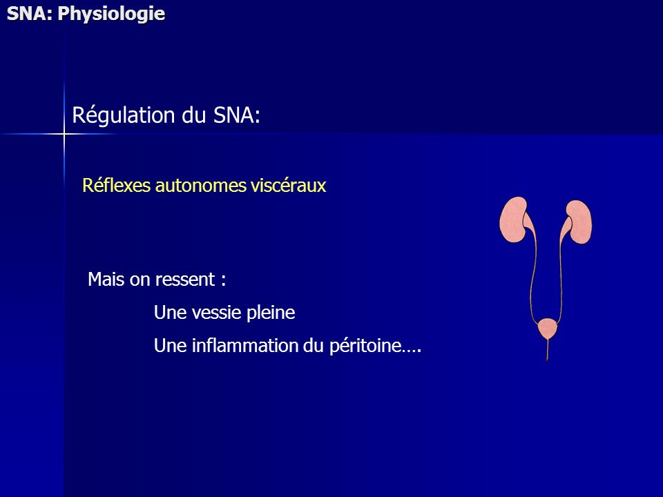 SNA: Physiologie Régulation du SNA: Réflexes autonomes viscéraux Mais on ressent : Une vessie pleine Une inflammation du péritoine….