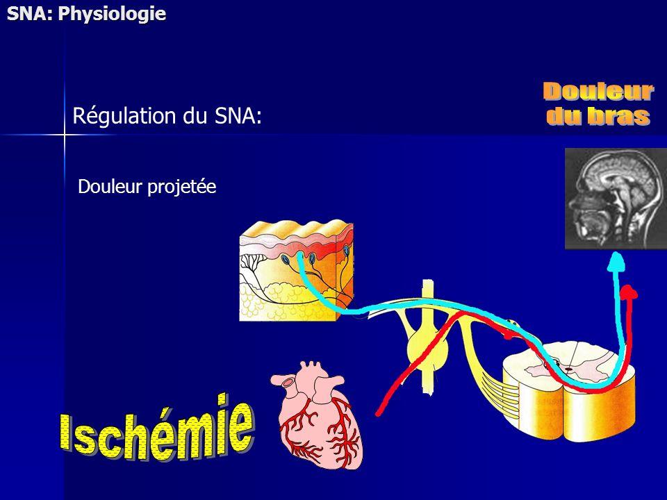 Douleur projetée SNA: Physiologie Régulation du SNA: