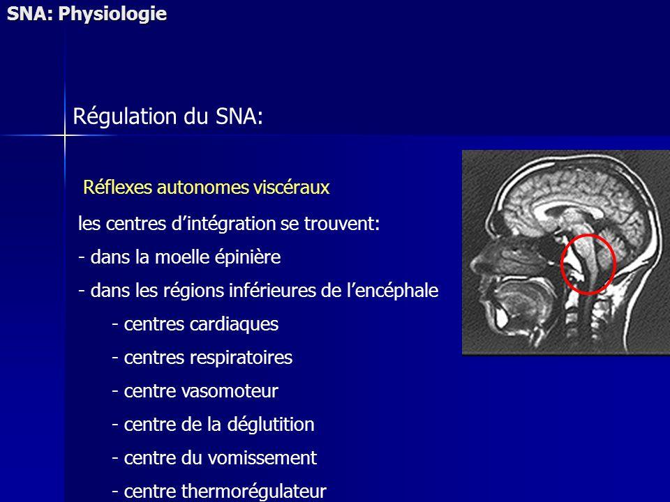 SNA: Physiologie Régulation du SNA: Réflexes autonomes viscéraux les centres dintégration se trouvent: - dans la moelle épinière - dans les régions inférieures de lencéphale - centres cardiaques - centres respiratoires - centre vasomoteur - centre de la déglutition - centre du vomissement - centre thermorégulateur