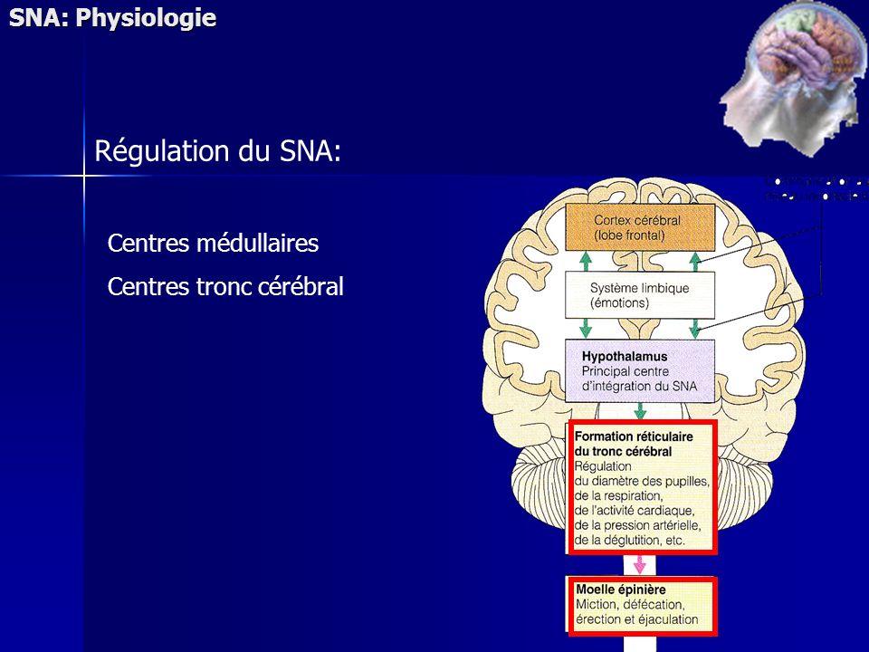SNA: Physiologie Régulation du SNA: Centres médullaires Centres tronc cérébral