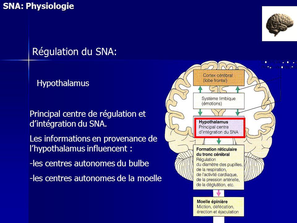 SNA: Physiologie Régulation du SNA: Hypothalamus Principal centre de régulation et dintégration du SNA. Les informations en provenance de lhypothalamu