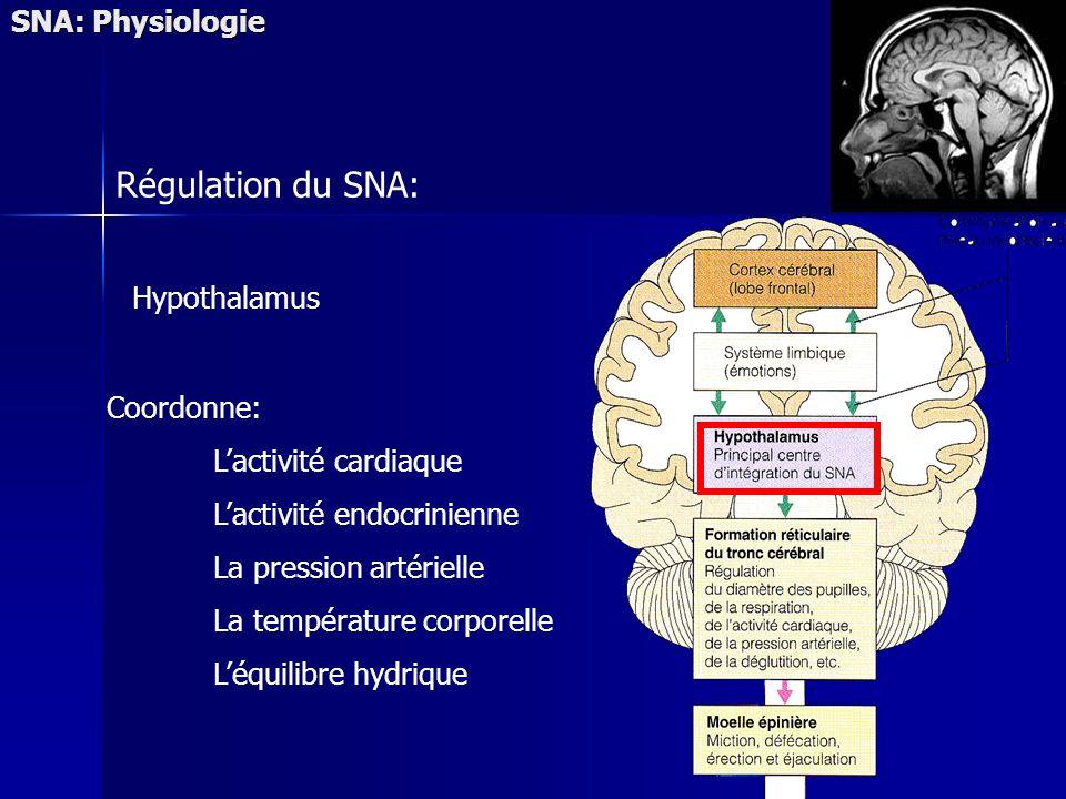 SNA: Physiologie Régulation du SNA: Hypothalamus Coordonne: Lactivité cardiaque Lactivité endocrinienne La pression artérielle La température corporelle Léquilibre hydrique