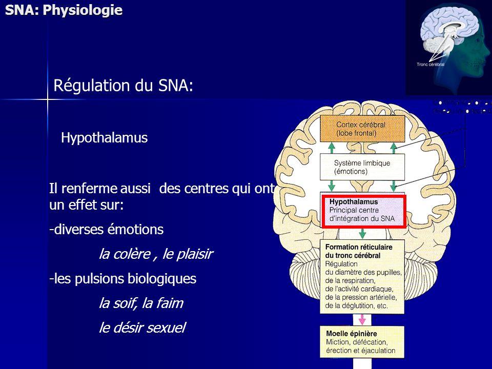 SNA: Physiologie Régulation du SNA: Hypothalamus Il renferme aussi des centres qui ont un effet sur: -diverses émotions la colère, le plaisir -les pulsions biologiques la soif, la faim le désir sexuel