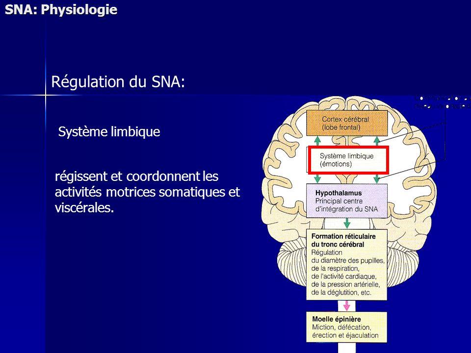 SNA: Physiologie Régulation du SNA: Système limbique régissent et coordonnent les activités motrices somatiques et viscérales.