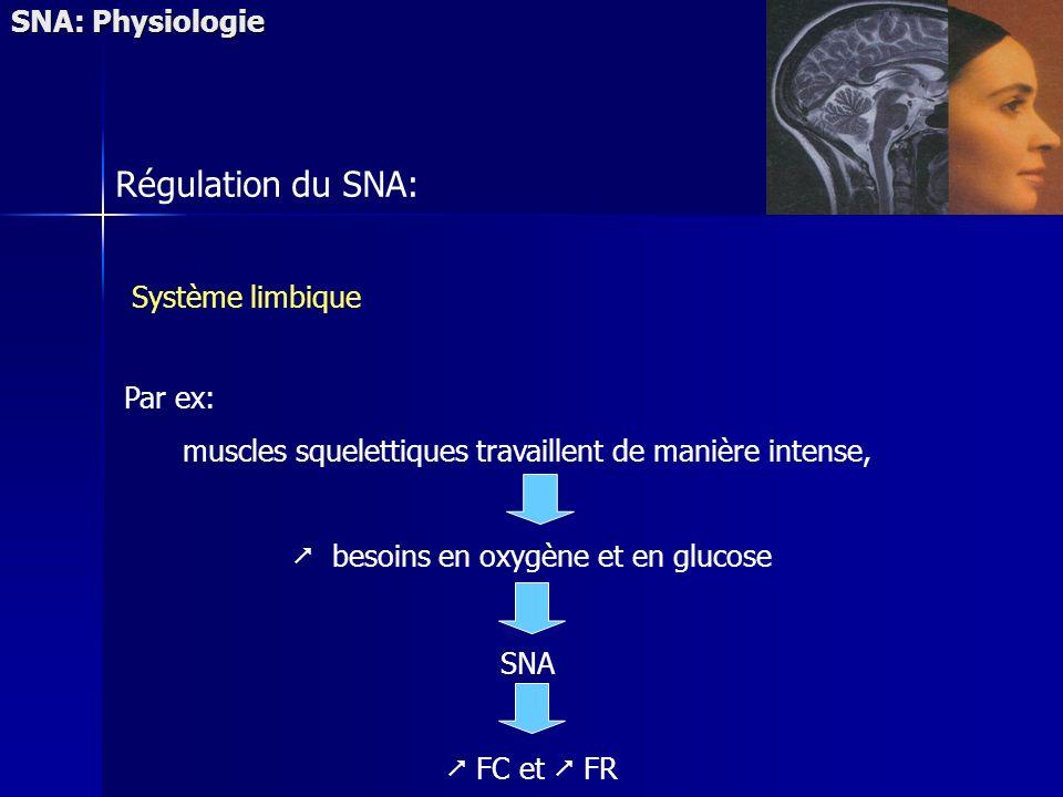 SNA: Physiologie Régulation du SNA: Système limbique Par ex: muscles squelettiques travaillent de manière intense, besoins en oxygène et en glucose SNA FC et FR