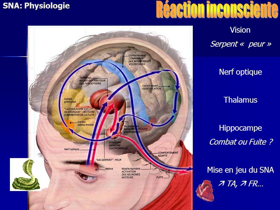 Vision Serpent « peur » Nerf optique Thalamus Hippocampe Combat ou Fuite ? Mise en jeu du SNA TA, FR… SNA: Physiologie