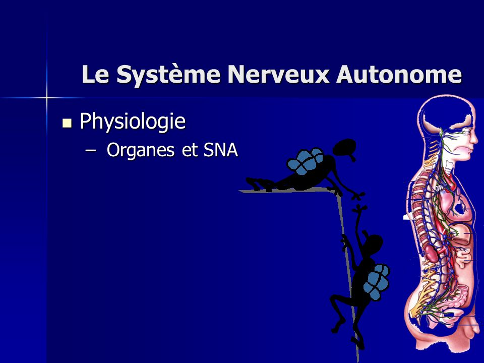 Physiologie Physiologie – Organes et SNA Le Système Nerveux Autonome