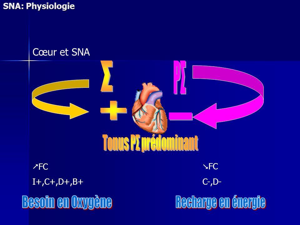 SNA: Physiologie Cœur et SNA FC I+,C+,D+,B+ FC C-,D-