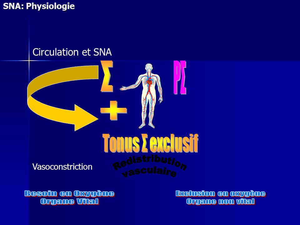 SNA: Physiologie Vasoconstriction Circulation et SNA