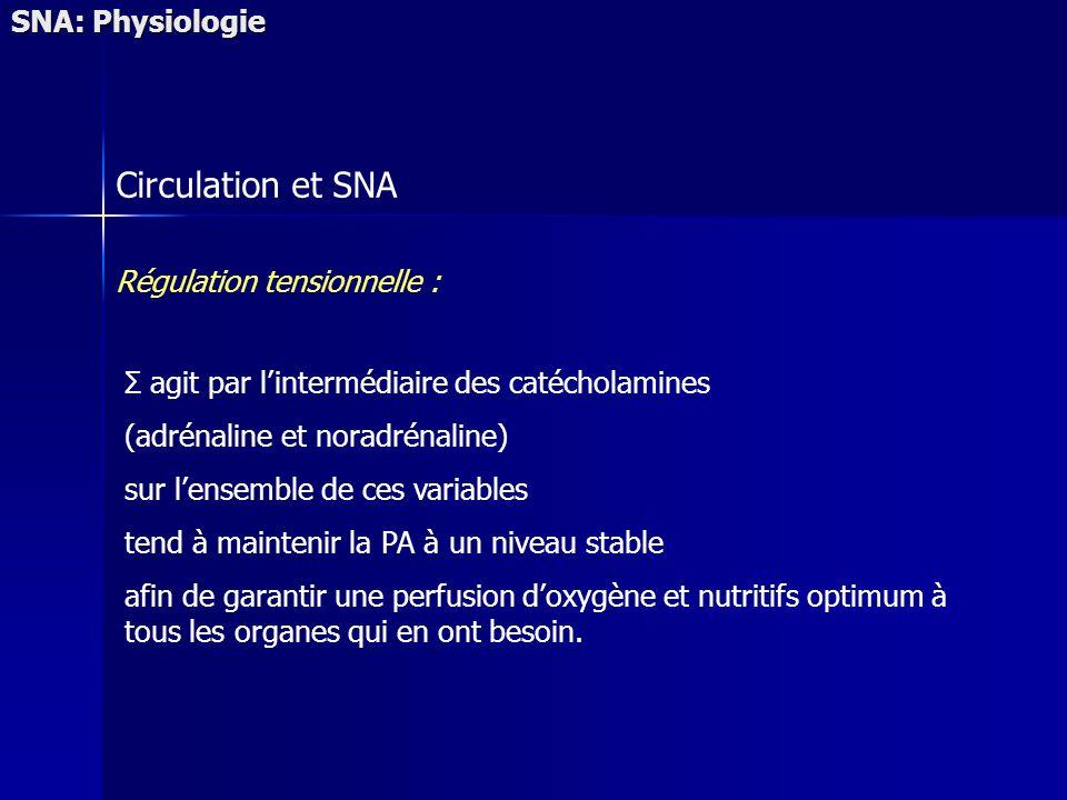 SNA: Physiologie Circulation et SNA Régulation tensionnelle : Σ agit par lintermédiaire des catécholamines (adrénaline et noradrénaline) sur lensemble