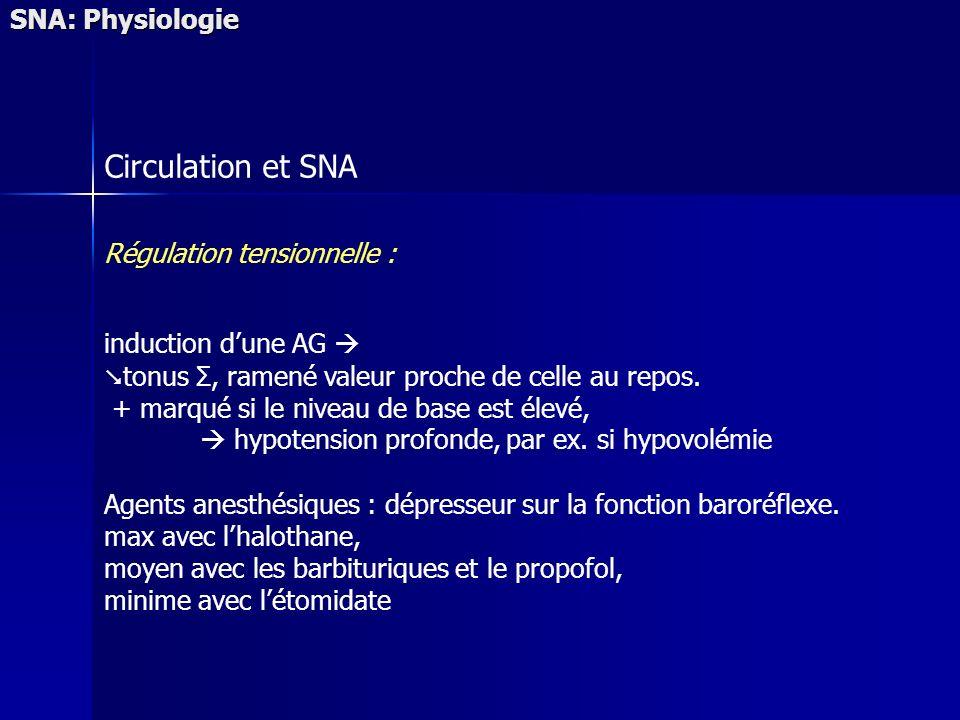 SNA: Physiologie Circulation et SNA Régulation tensionnelle : induction dune AG tonus Σ, ramené valeur proche de celle au repos. + marqué si le niveau