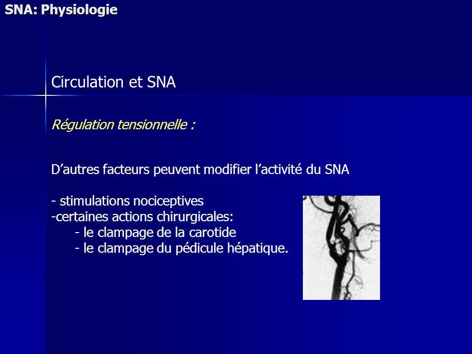 SNA: Physiologie Circulation et SNA Régulation tensionnelle : Dautres facteurs peuvent modifier lactivité du SNA - stimulations nociceptives -certaines actions chirurgicales: - le clampage de la carotide - le clampage du pédicule hépatique.