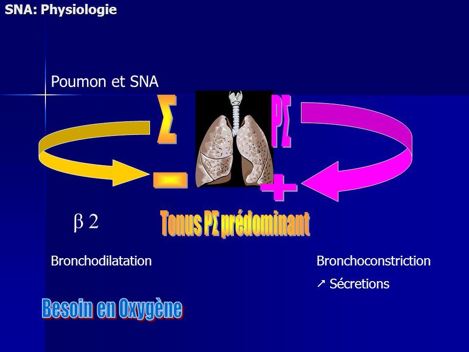SNA: Physiologie BronchodilatationBronchoconstriction Sécretions Poumon et SNA β 2