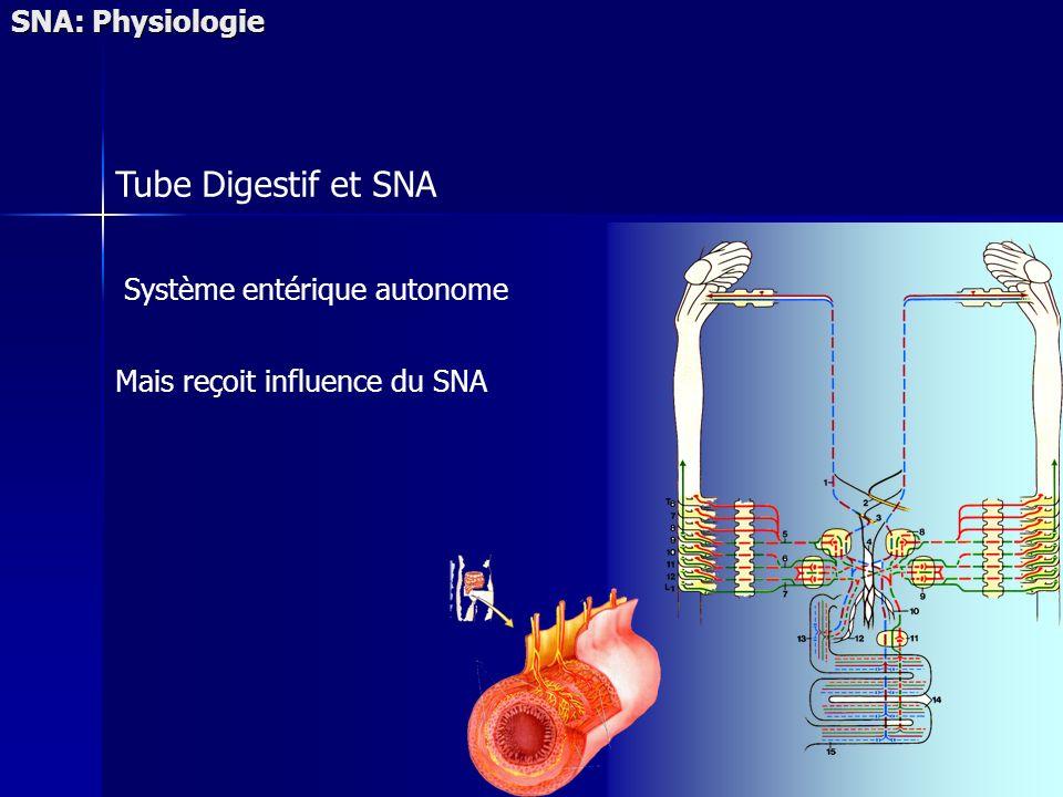 Tube Digestif et SNA SNA: Physiologie Système entérique autonome Mais reçoit influence du SNA