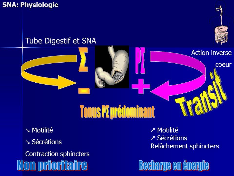 SNA: Physiologie Motilité Sécrétions Contraction sphincters Motilité Sécrétions Relâchement sphincters Tube Digestif et SNA Action inverse coeur