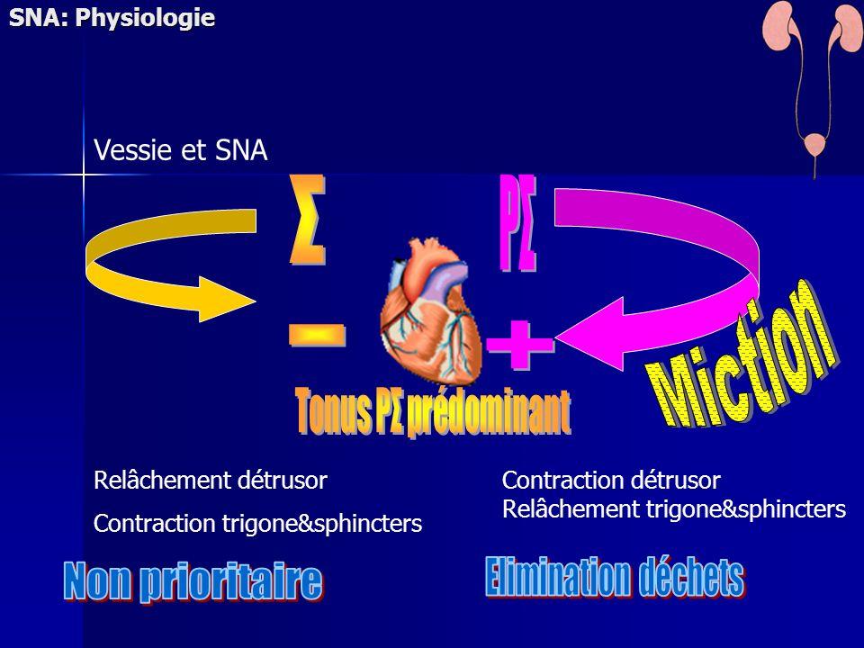 Relâchement détrusor Contraction trigone&sphincters Contraction détrusor Relâchement trigone&sphincters Vessie et SNA