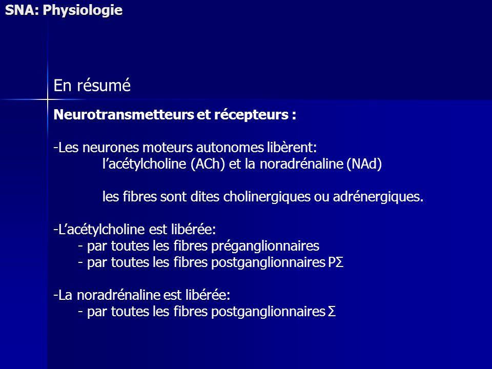 SNA: Physiologie En résumé Neurotransmetteurs et récepteurs : -Les neurones moteurs autonomes libèrent: lacétylcholine (ACh) et la noradrénaline (NAd) les fibres sont dites cholinergiques ou adrénergiques.