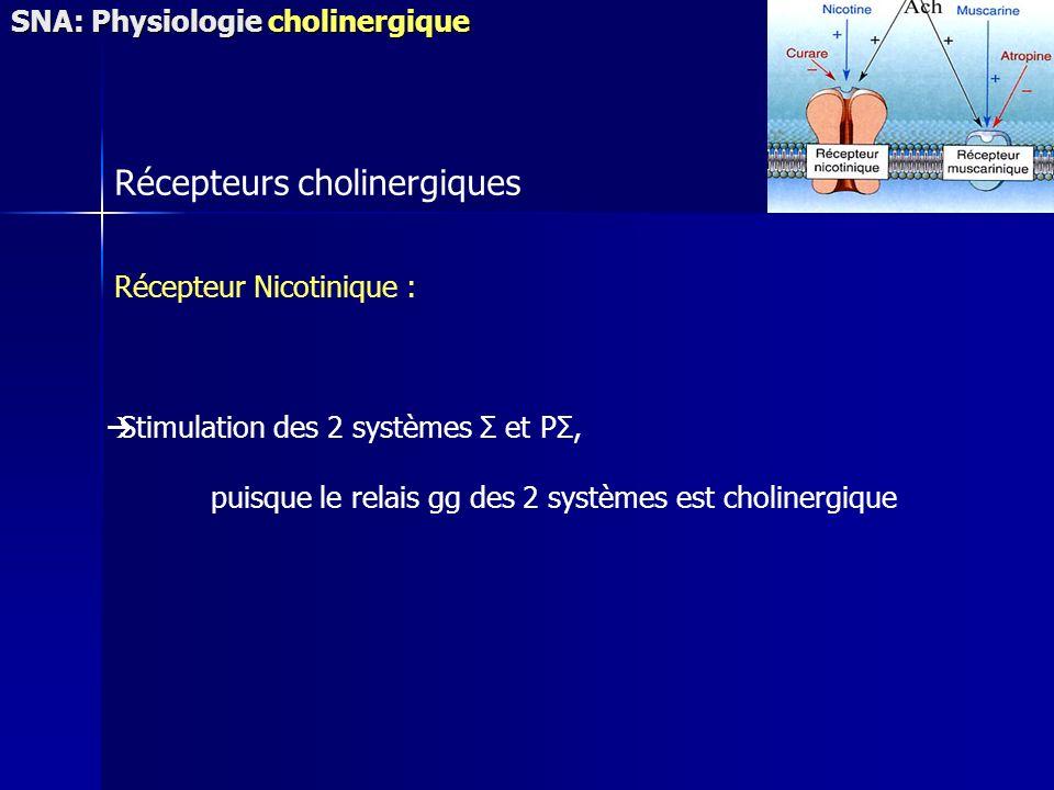 Récepteurs cholinergiques Récepteur Nicotinique : Stimulation des 2 systèmes Σ et PΣ, puisque le relais gg des 2 systèmes est cholinergique SNA: Physiologie cholinergique