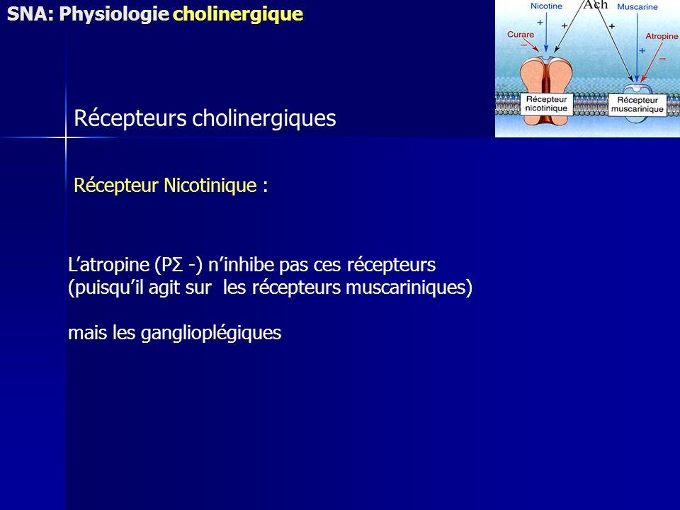 Récepteurs cholinergiques Récepteur Nicotinique : Latropine (PΣ -) ninhibe pas ces récepteurs (puisquil agit sur les récepteurs muscariniques) mais les ganglioplégiques SNA: Physiologie cholinergique