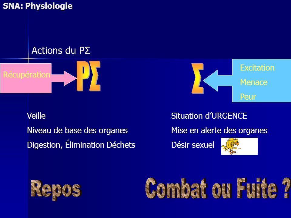SNA: Physiologie Actions du PΣ Veille Niveau de base des organes Digestion, Élimination Déchets Situation dURGENCE Mise en alerte des organes Désir sexuel Excitation Menace Peur Récupération