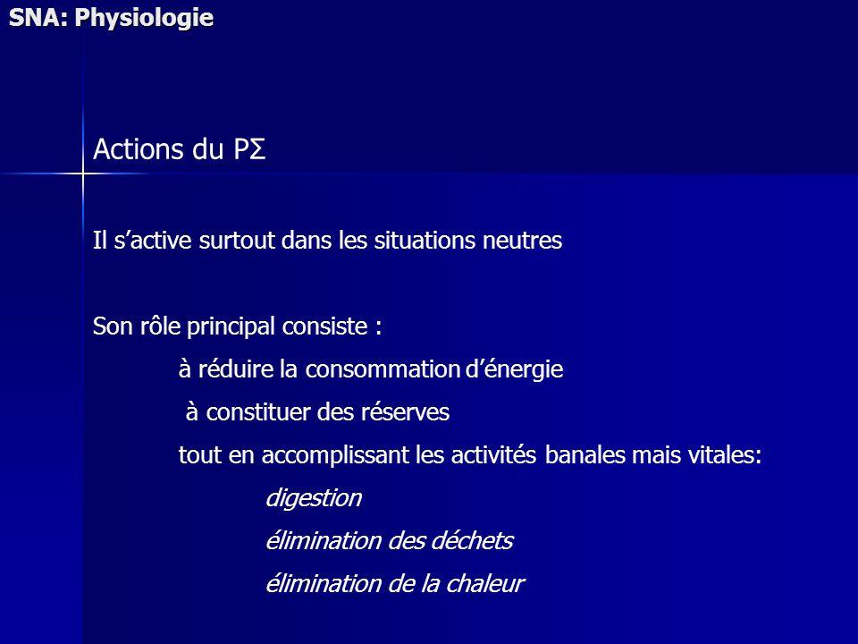 SNA: Physiologie Actions du PΣ Il sactive surtout dans les situations neutres Son rôle principal consiste : à réduire la consommation dénergie à const