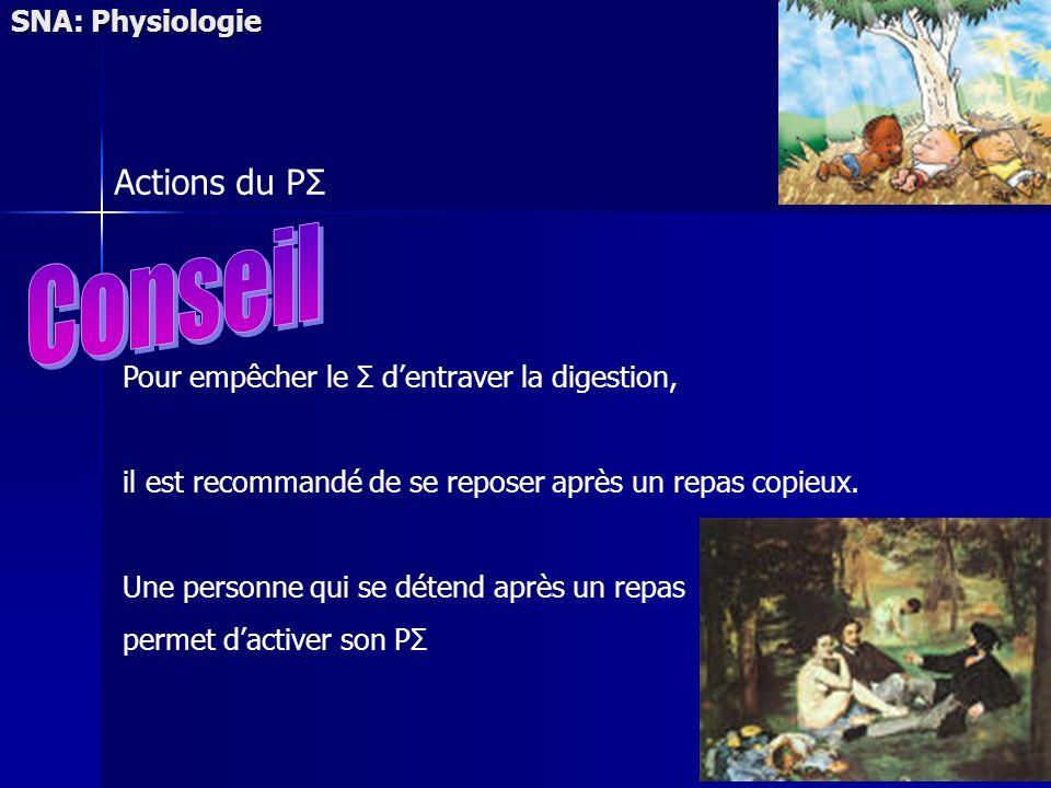 SNA: Physiologie Actions du PΣ Pour empêcher le Σ dentraver la digestion, il est recommandé de se reposer après un repas copieux. Une personne qui se